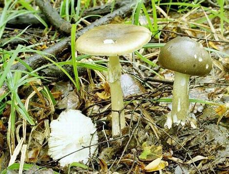 Тихая охота. Правила сбора грибов