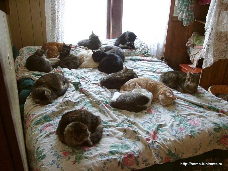 Какого кота лучше завести в квартире