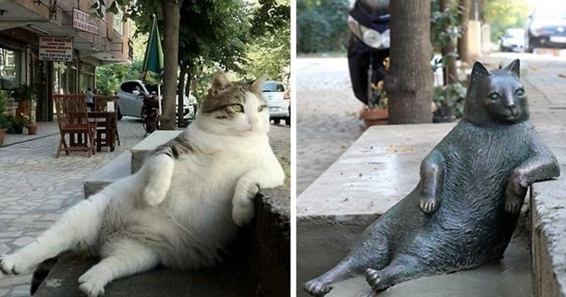 Самый знаменитый кот Стамбула удостоен памятника из бронзы животные, кот, памятник, стамбул