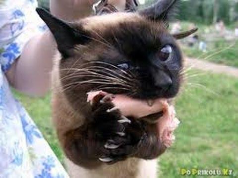 Теплые коты))