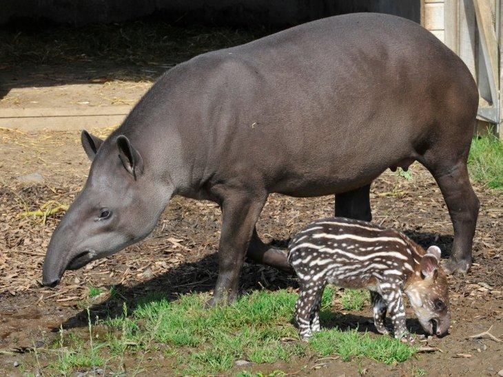 Животные, у которых детеныши совсем непохожи на взрослые особи