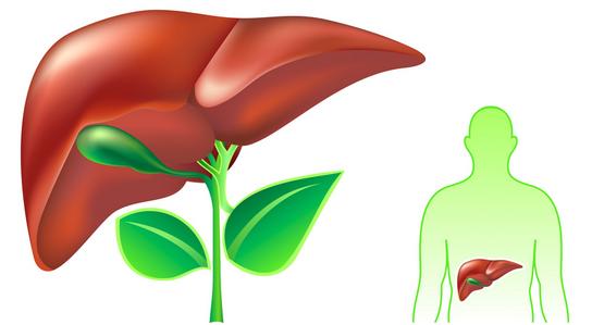 Лечение печени натуральными средствами