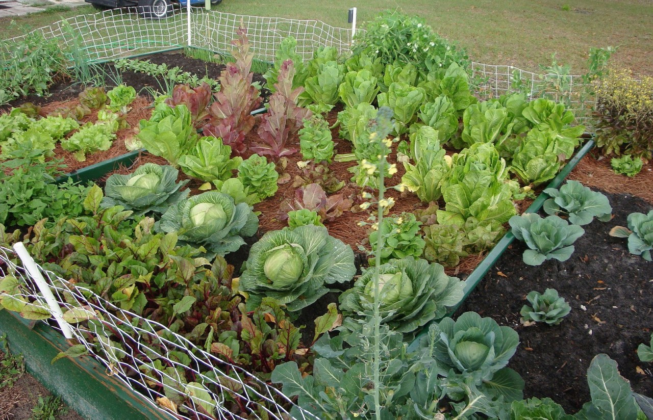 Полезные советы от опытных огородников...
