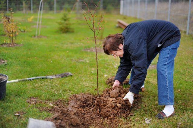 5 ошибок при осенней посадке деревьев и кустарников