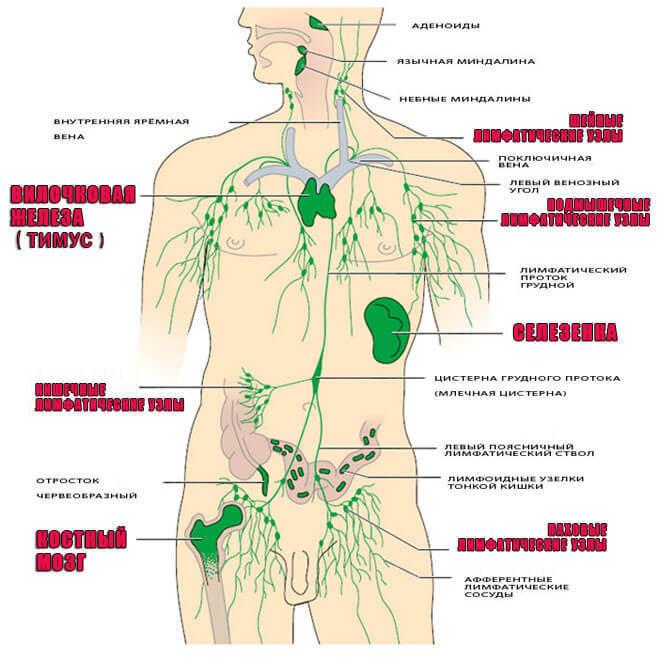 2 простых упражнения для повышения иммунитета