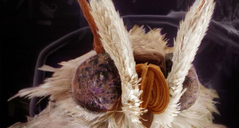 Мурашки по телу: захватывающие детальные портреты насекомых