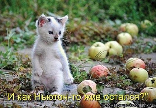 1495826314_kotomatricy-13