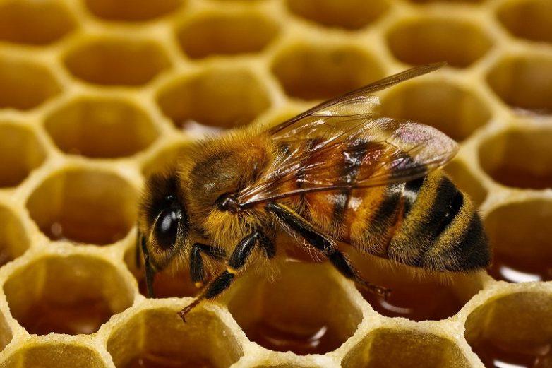 8 вещей, которые произойдут с организмом, если есть мёд каждый день