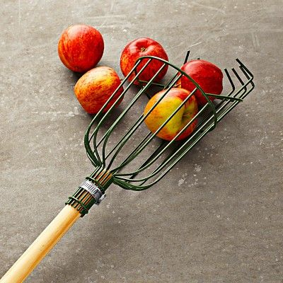 "Apple Picker Designed for harvesting tree fruits such as apples, pears and plums. Steel wire basket is PVC coated for rust resistance. Foam cushion protects fruit as it falls into the basket. Engage the wire teeth around the fruit's stem of the fruit and gently pull. 71"" long. 13 oz.:"
