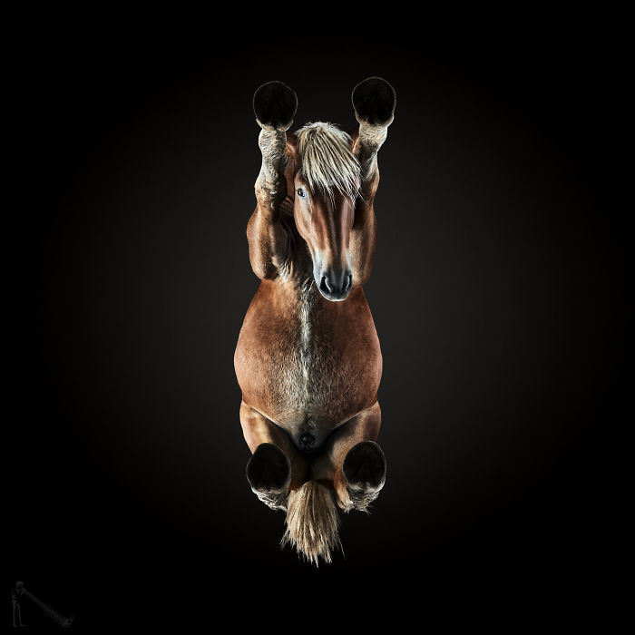 Under-Horse: I Photograph Horses From Underneath