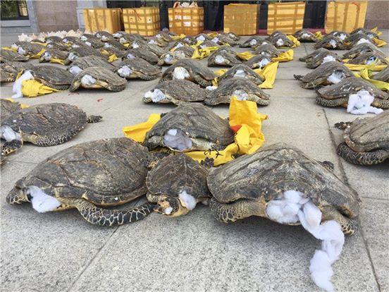 Сотрудники таможенной службы обнаружили исчезающий вид
