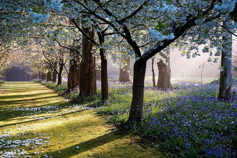 mapleglen03 Восхитительный сад Maple Glen в Новой Зеландии