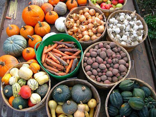 Правильное хранение овощей и других культур