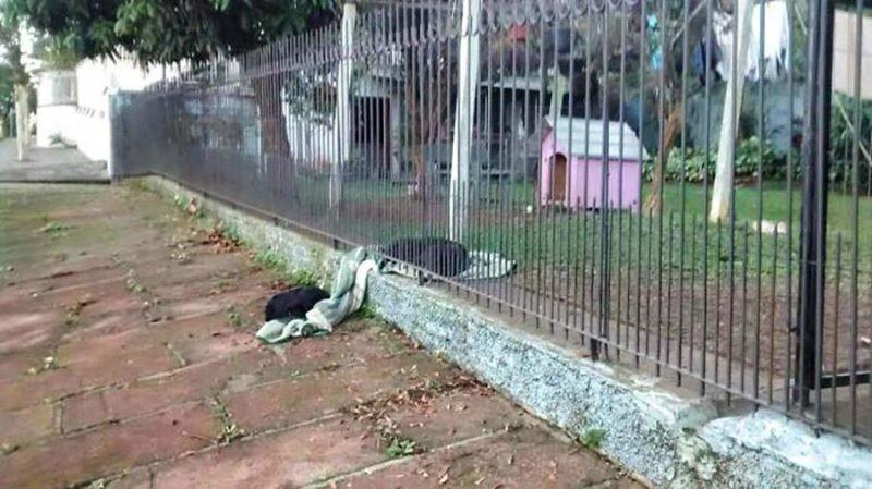 Поэтому, когда она увидела бродячую собаку, бегающую у них за забором, она решила поделиться с ней частью своего одеяла бразилия, в мире, дружба, животные, милота, помощь, собака