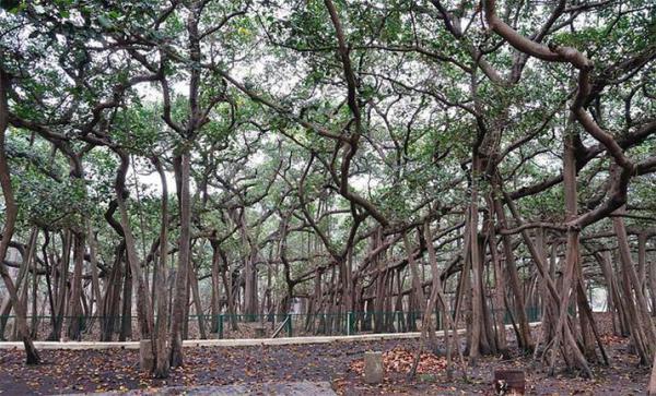 Удивительные деревья.