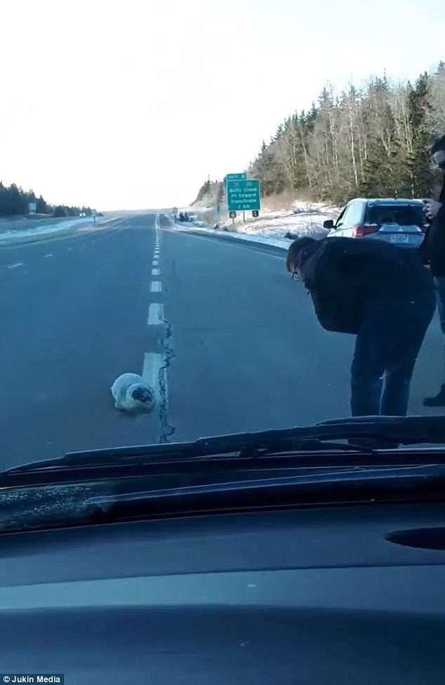 Осторожно, на дорогах ожидаются тюлени! Не забудьте спальный мешок и швабру