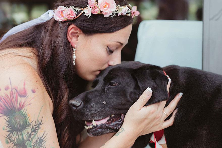 Умирающий пес дожил до свадьбы любимой хозяйки