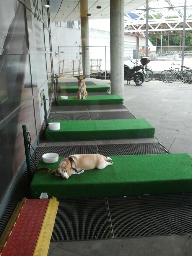 «Парковки» для собак доброта, животные, мир