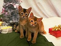 Кошки и Котята 4
