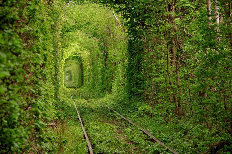 Тоннель любви, Украина красивые места, красота, невероятные места, фото