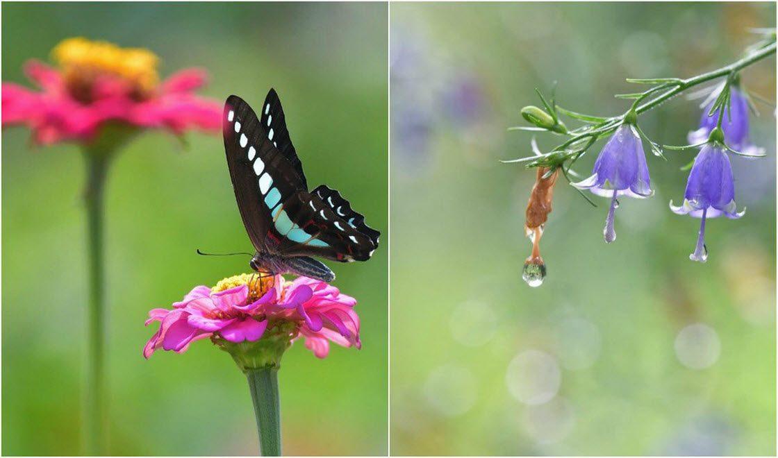Насекомые и цветы на снимках…
