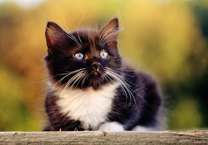 Котенок и молитвы