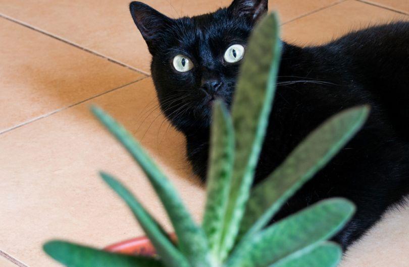 10 комнатных растений, которых стоит бояться домашним животным