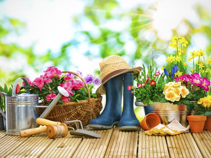 Весенние работы в саду: что и как? - Smak.ua