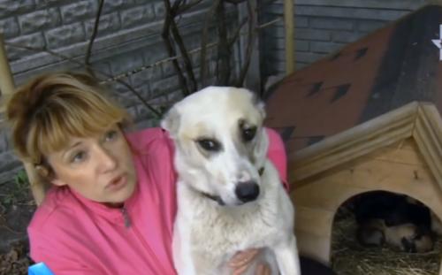 Спасение из озера собаки с мешком щенят на шее