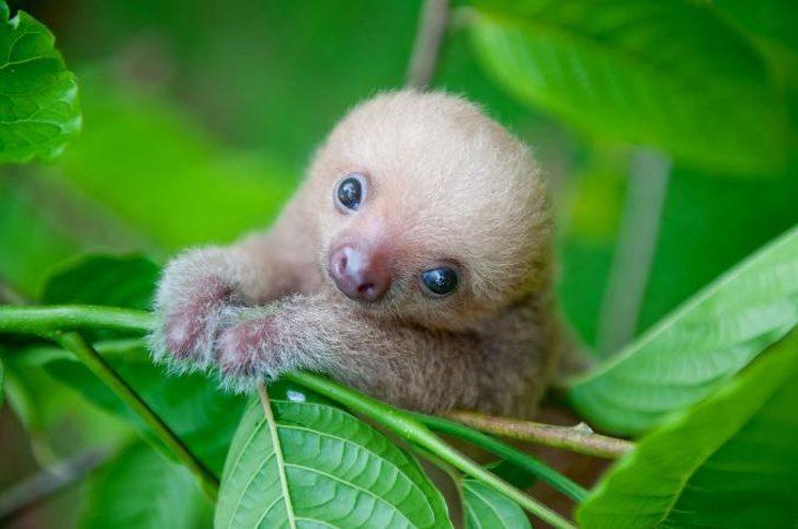 Очаровательные детеныши животных