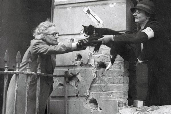 Большая резня  Зачем британцы жестоко истребляли домашних кошек и собак