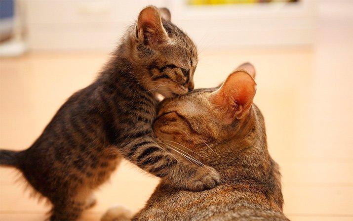 Мамина любовь...