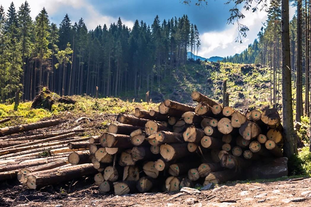 США уничтожают природу в Польше ради увеличения военного присутствия