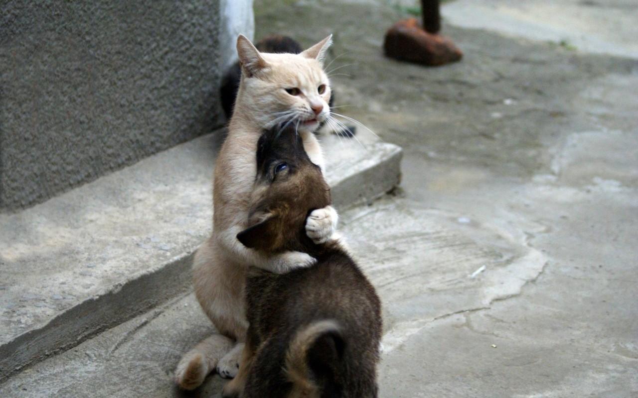 Про котА и Собаку