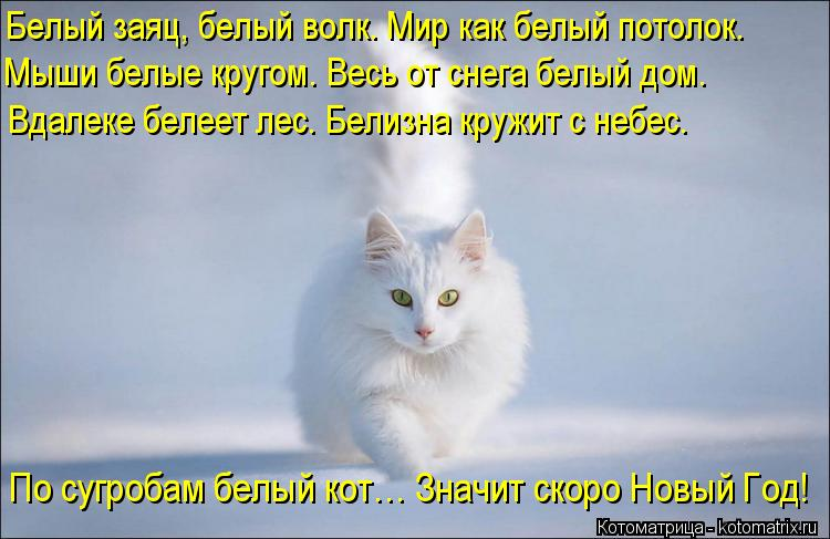 Котоматрица: Белый заяц, белый волк. Мир как белый потолок. Мыши белые кругом. Весь от снега белый дом. Вдалеке белеет лес. Белизна кружит с небес. По сугро