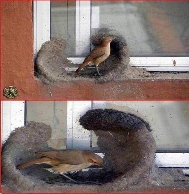 Птички строят дом (11 фото)