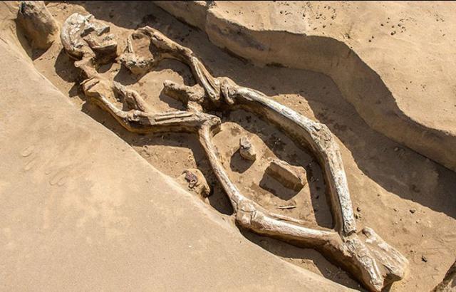 В России нашли необычный древний скелет