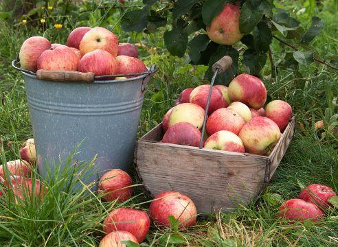 8 жестких способов заставить сад плодоносить
