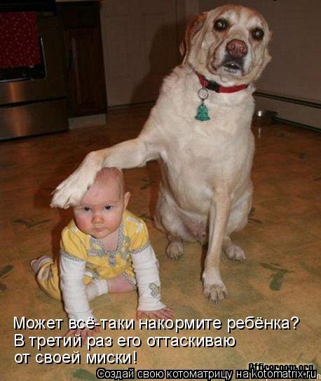 Котоматрица - Может всё-таки накормите ребёнка? В третий раз его оттаскиваю  от свое