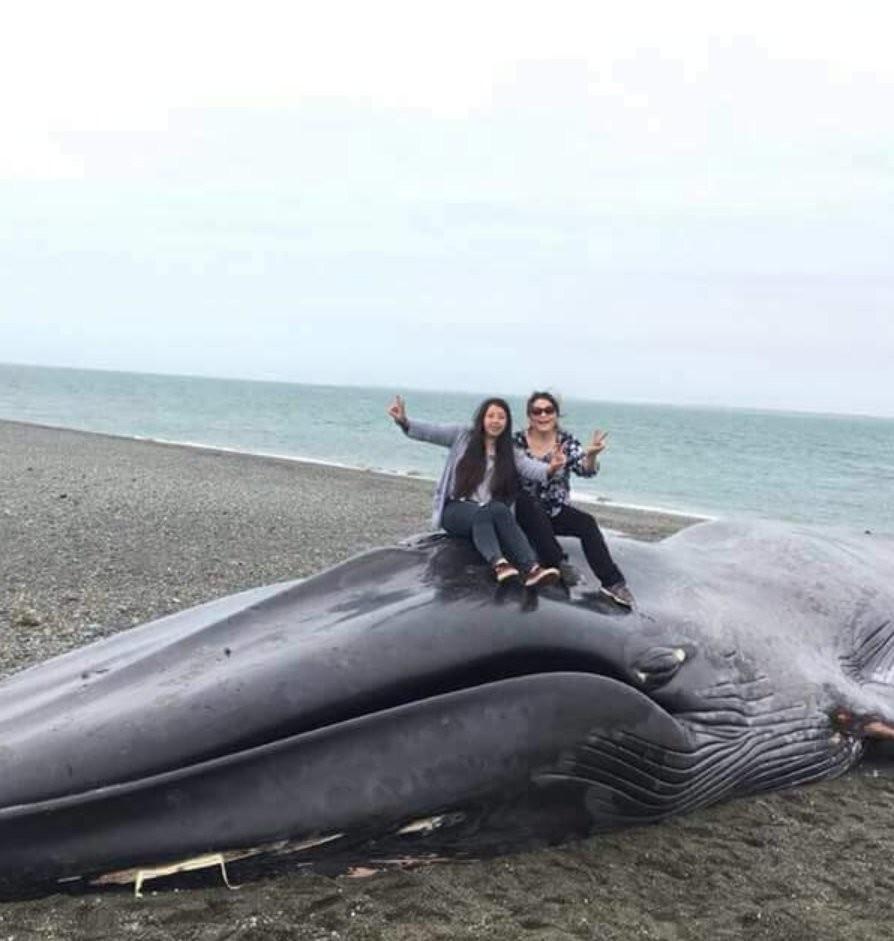"""""""Киса и Ося были здесь"""". Жители Чили расписали тушу выброшенного на берег кита"""