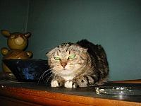 Кошки и Котята 8