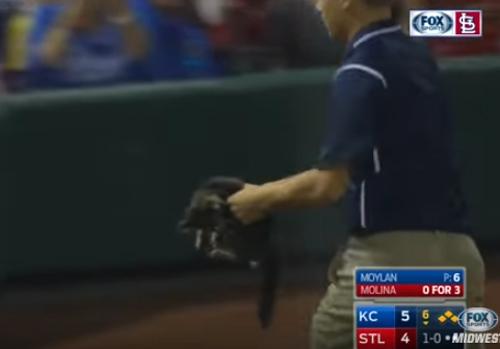 Котёнок стал звездой бейсбольного матча