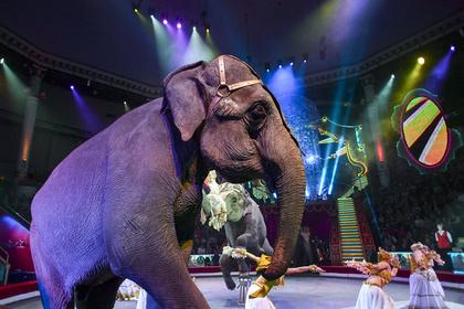 Старейший передвижной цирк США закроется из-за зоозащитников