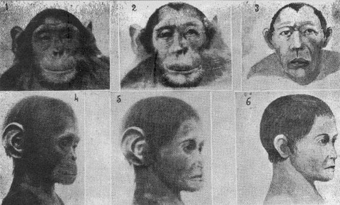 Как русский биолог Иванов пытался скрестить человека и шимпанзе