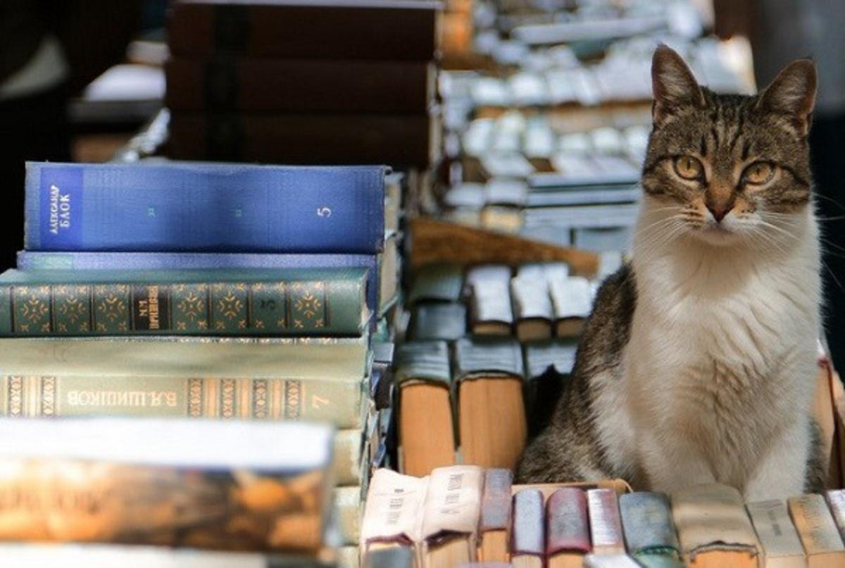 В Ростове найдены читающие коты