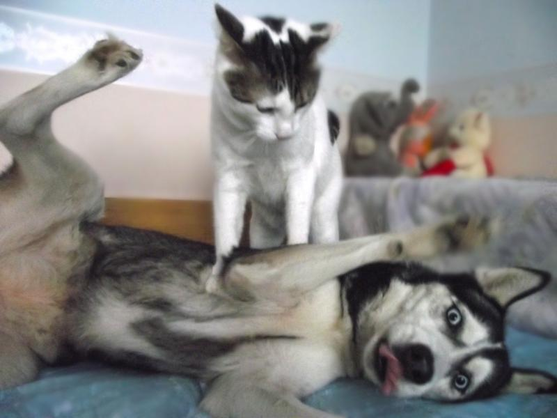 Кот с мясом видео