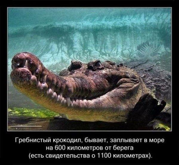 Любопытные факты о крокодилах