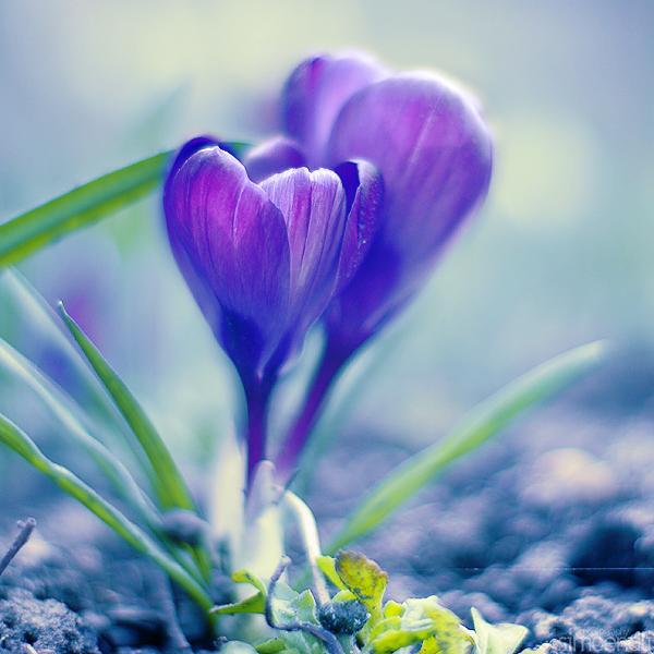 Трогательная нежность цветов