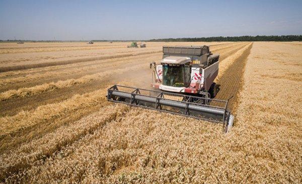 Россия завоевывает пшеничную корону, как во времена СССР