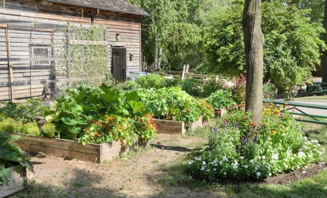 10 простых способов создать бюджетный и красивый сад